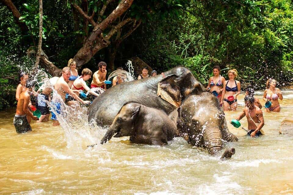 Elephant Jungle Sanctuary