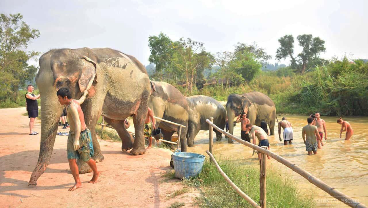 Autor: Elephant Jungle Sanctuary
