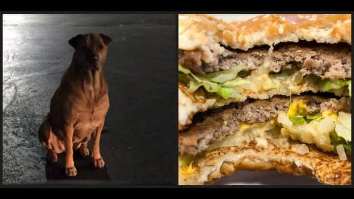 Se hace pasar por un perro callejero para que McDonald's le de hamburguesas