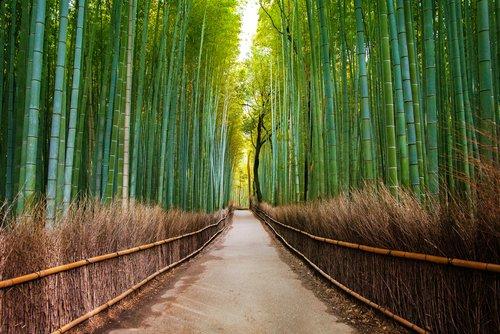 imagen requisitos para entrar a Bosque de bambu de Arashiyama Kioto Japon