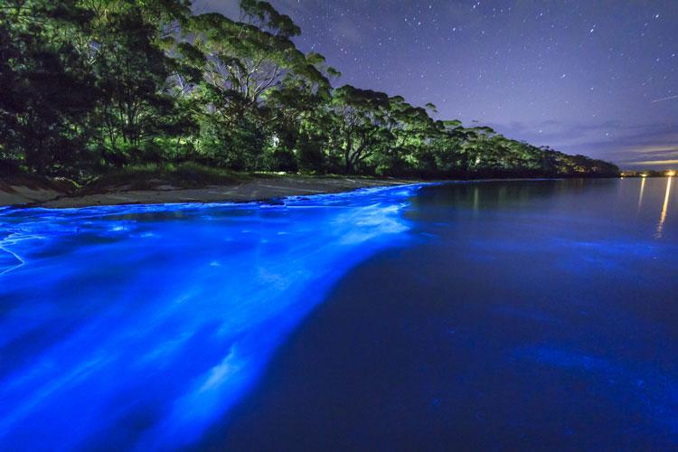 Imagen Laguna Grande Bio Bay