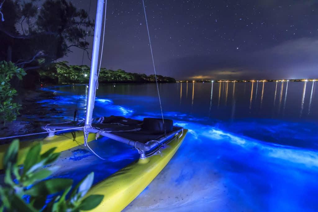 Imagen Bioluminescent Plankton 7