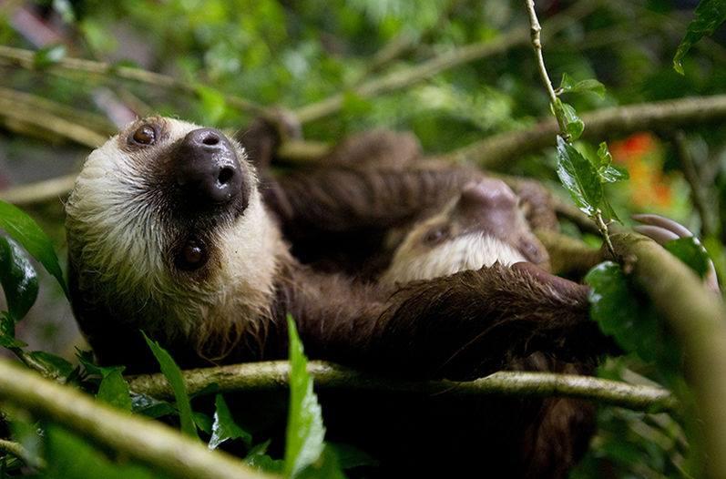 Imagen Pmontiel Photogenic Baby Sloth