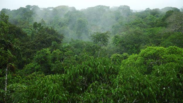 Imagen 104957837 Selva