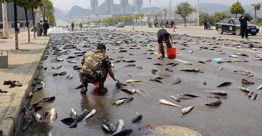 lluvia-de-peces