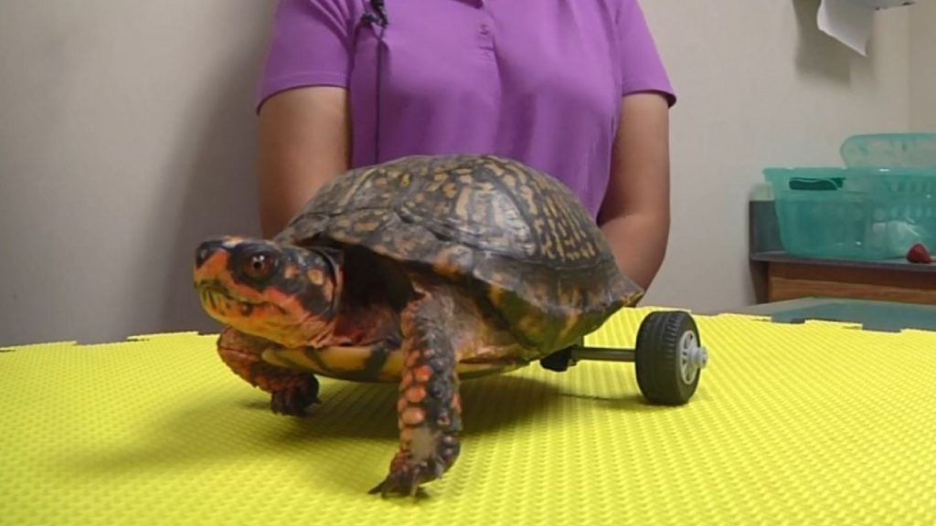Imagen Box Turtle Without Legs Gets Custom Lego 2 93484698 Ver1.0 1280 720