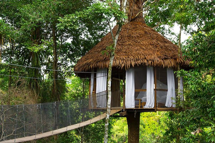 imagen Treehouse