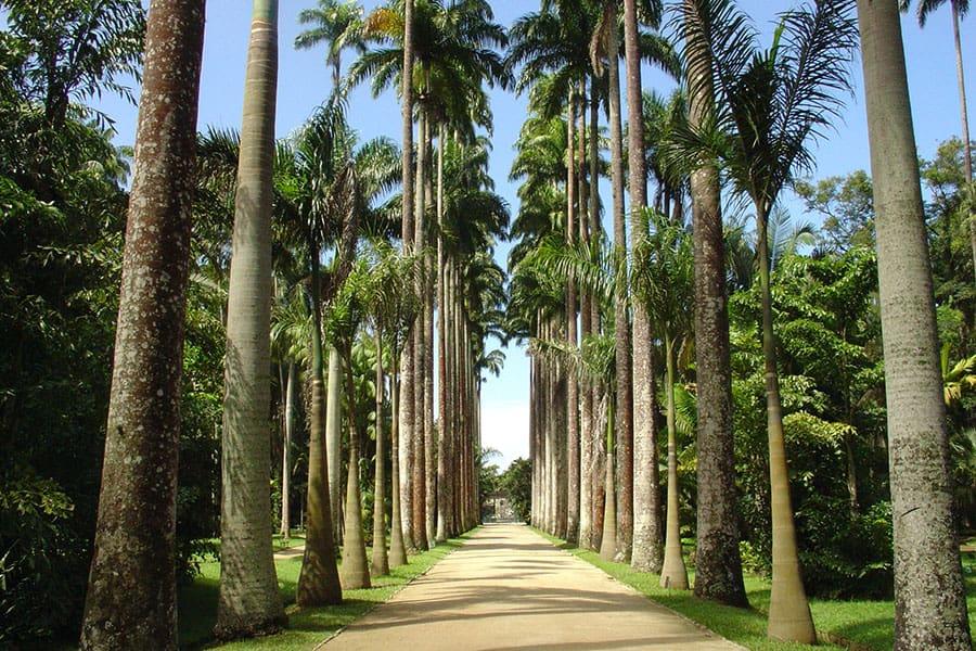 Imagen Cómo Llegar A Parque Lage Palmeiras 1