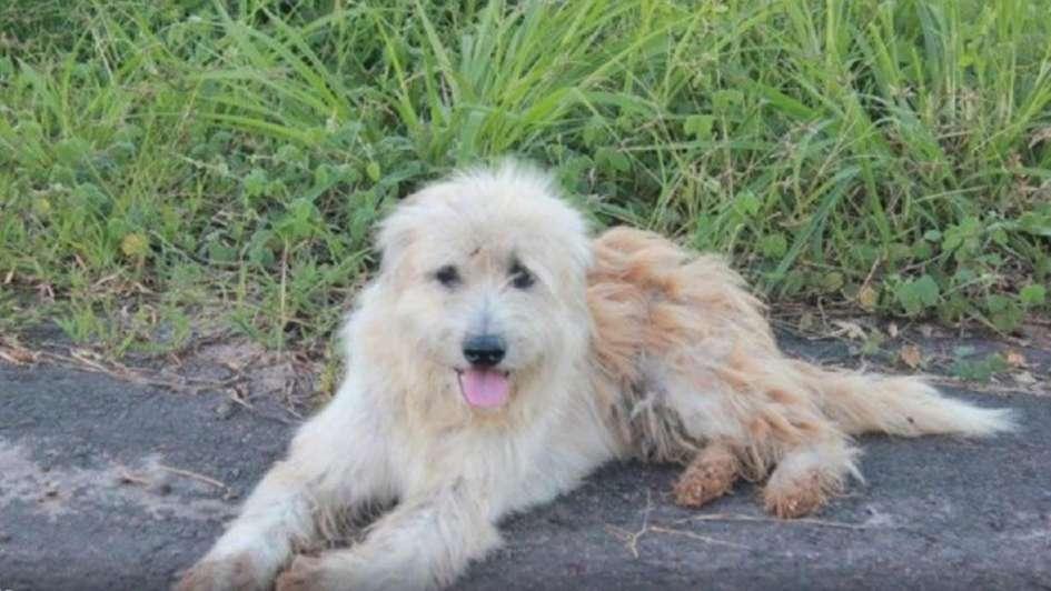 Un perro perdido esperó 4 años al costado de una carretera a su dueño