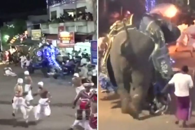 imagen Moment tortured elephant rampages through crowd injuring 18 after being