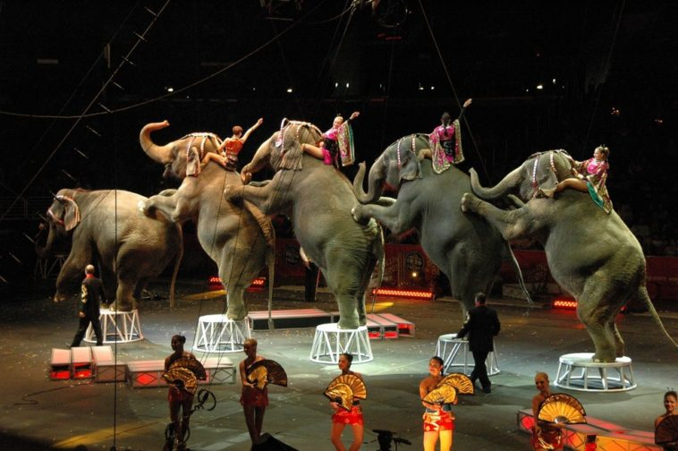 imagen elefantes
