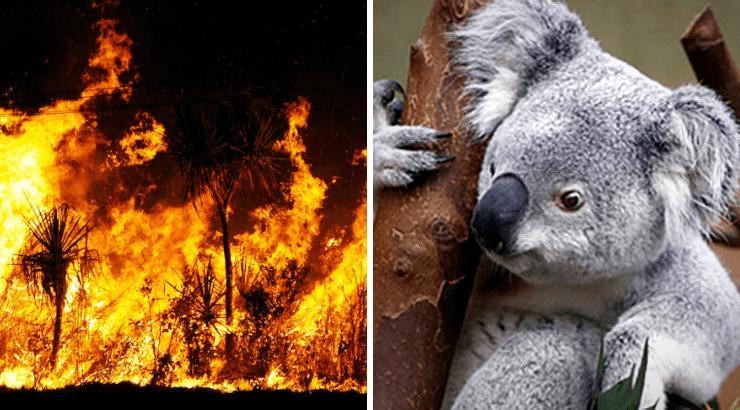 El famoso estudio de Warner Bros. fue evacuado debido a un incendio forestal