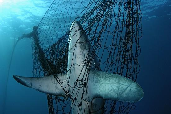 Colombia: polémica por un decreto que permite la caza de tiburones para comercializar sus aletas