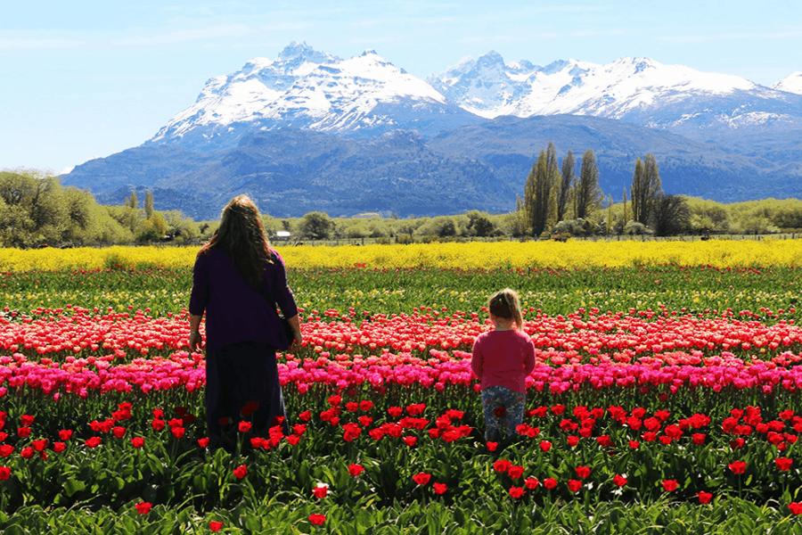 Trevelin Y El Encanto De Los Tulipanes