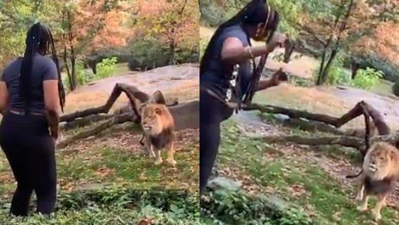 bronx-zoo-lion-woman-video
