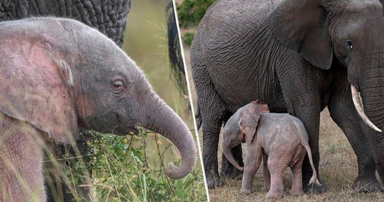 imagen elefante 1
