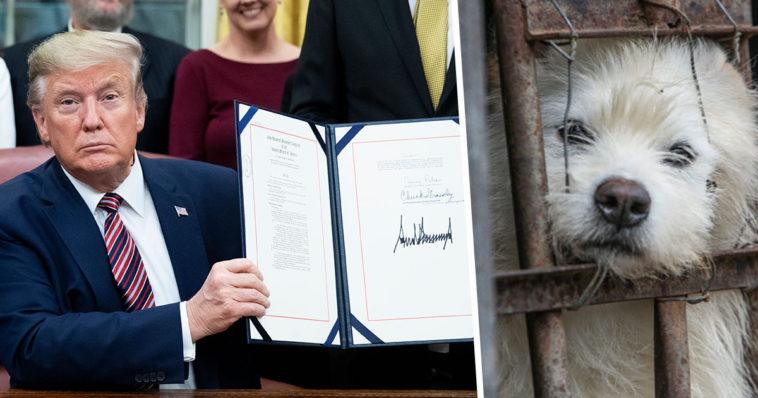 Imagen Donald Trump Animal Cruelty Bill