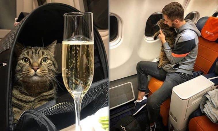 Barcelona: Retrasaron un vuelo luego de que un hombre se colara en el avión y se encerrara en el baño
