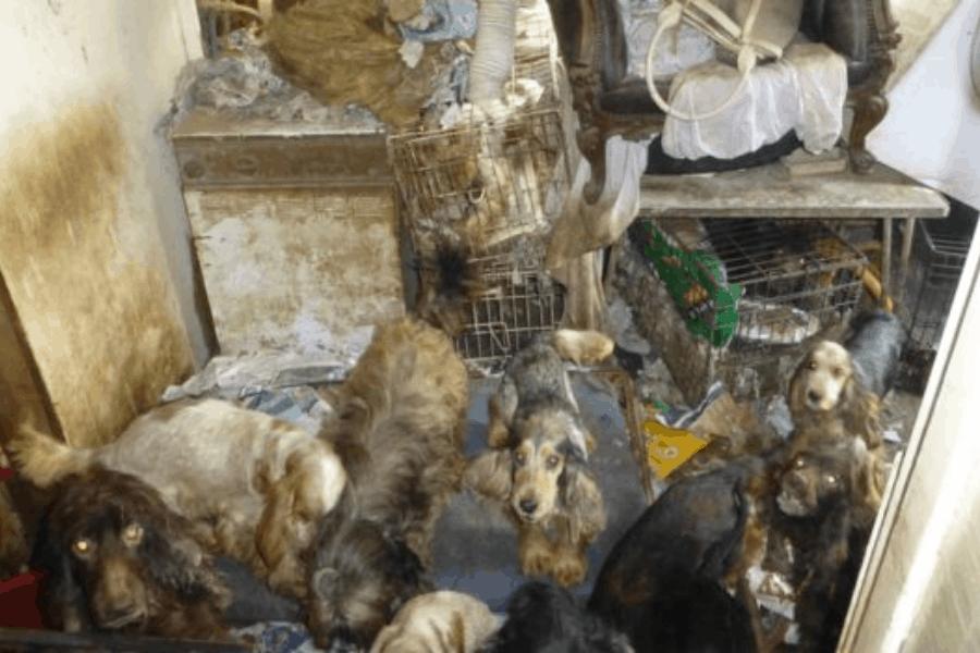 Inglaterra: Prohibieron de por vida tener mascotas a una mujer que mantenía cautivos a 54 perros en su hogar