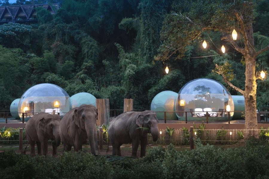 Este resort en Tailandia permitirá dormir en burbujas para ...