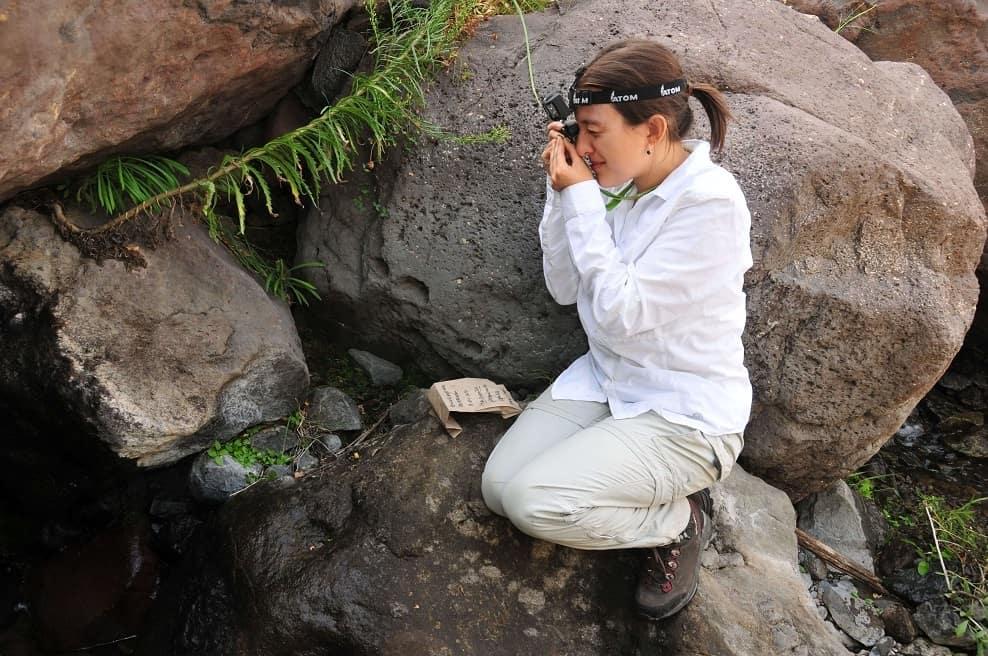Las desconocidas plantas descubiertas en la reserva nacional río de los Cipreses (Chile)