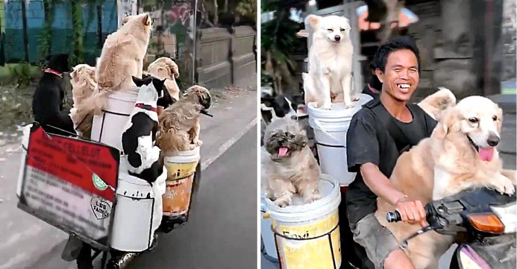 Este hombre viaja feliz junto a sus 6 perritos en una motocicleta en las calles de Bali