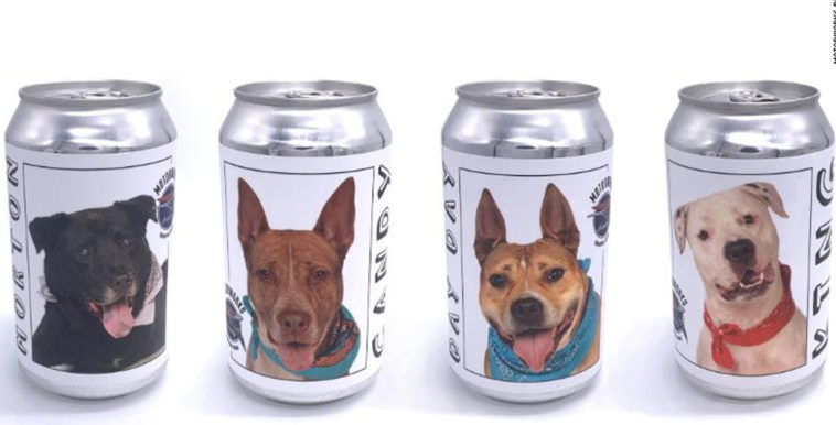 imagen perro 4