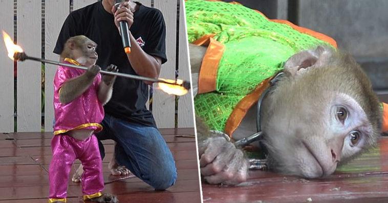 Rescatan a más de 200 perritos cuyas cuerdas vocales fueron cortadas por sus criadores en Madrid
