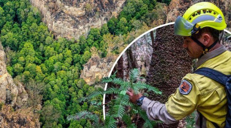 Bahía Príncipe Hotels & Resorts plantará árboles por cada visita a su stand en la FITUR en Madrid