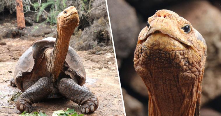 imagen diego the tortoise 1