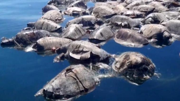 Diego, la tortuga que tuvo tanto sexo que salvó a su especie en las Islas Galápagos, se retira
