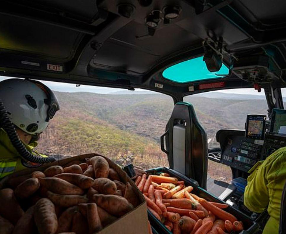 imagen carrotss