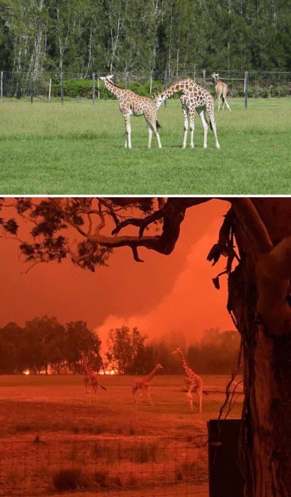 Imagen Australia Bushfires Before After Photos 22 5E159968B2B49 700 1