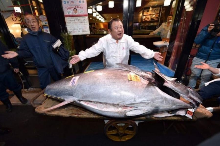 Insólito: Un empresario japonés pagó € 1,5 millones por un atún de 276 kilos
