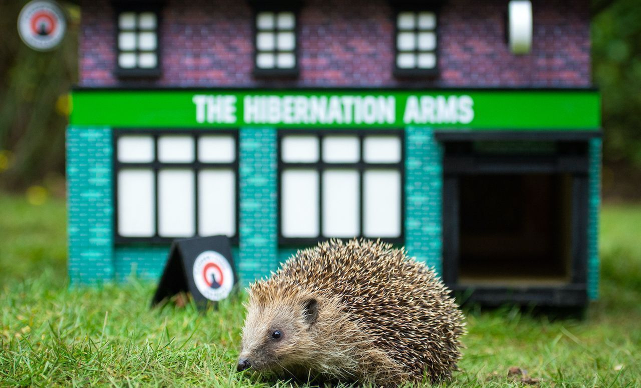 Hedgehog-pub