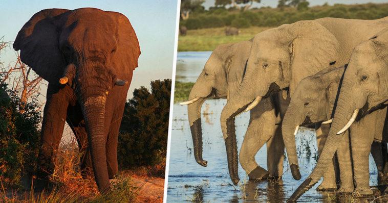 imagen botswana