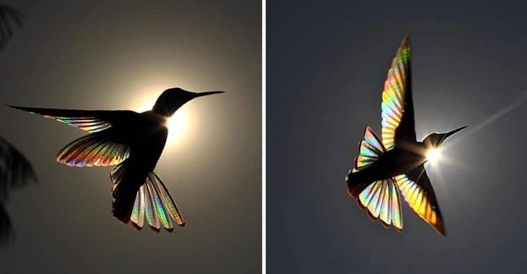 imagen colibri