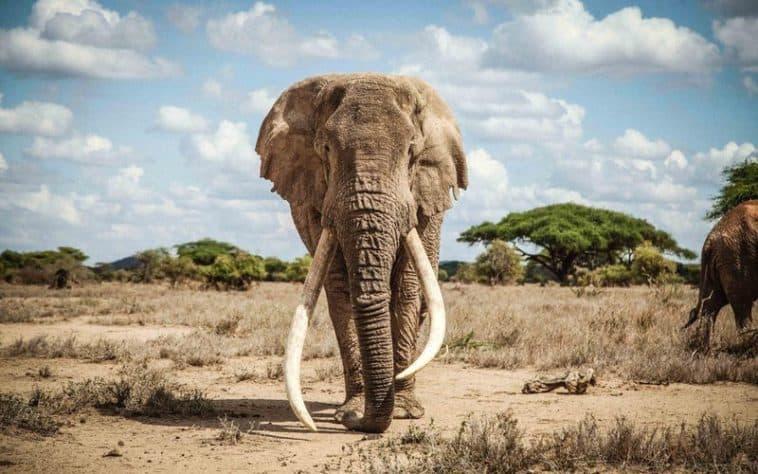 imagen elefante