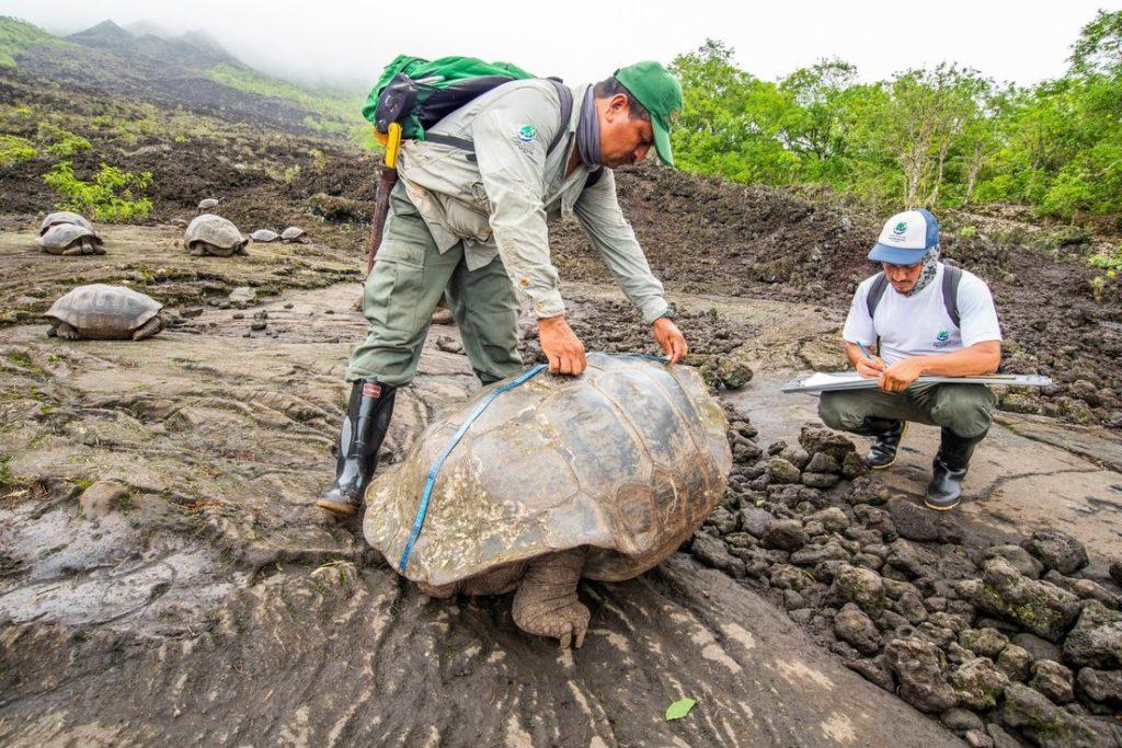 Aprovechan la ausencia de turistas para estudiar el comportamiento de la fauna en las Islas Galápagos