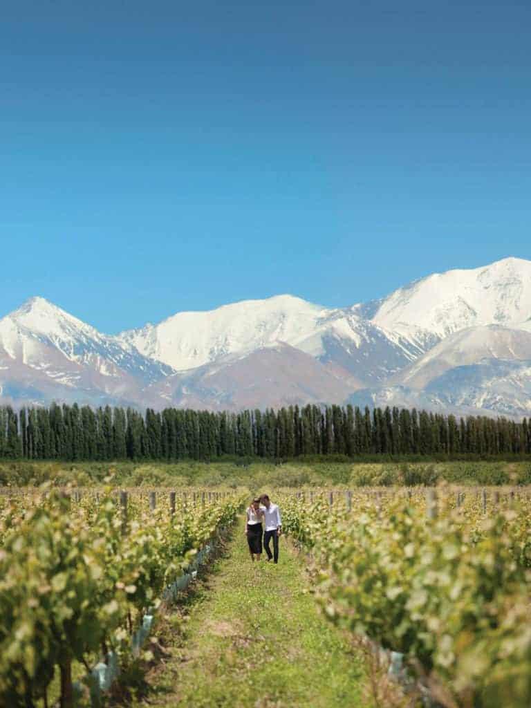 imagen Mendoza l%C3%ADder en la producci%C3%B3n vitivin%C3%ADcola en Argentina