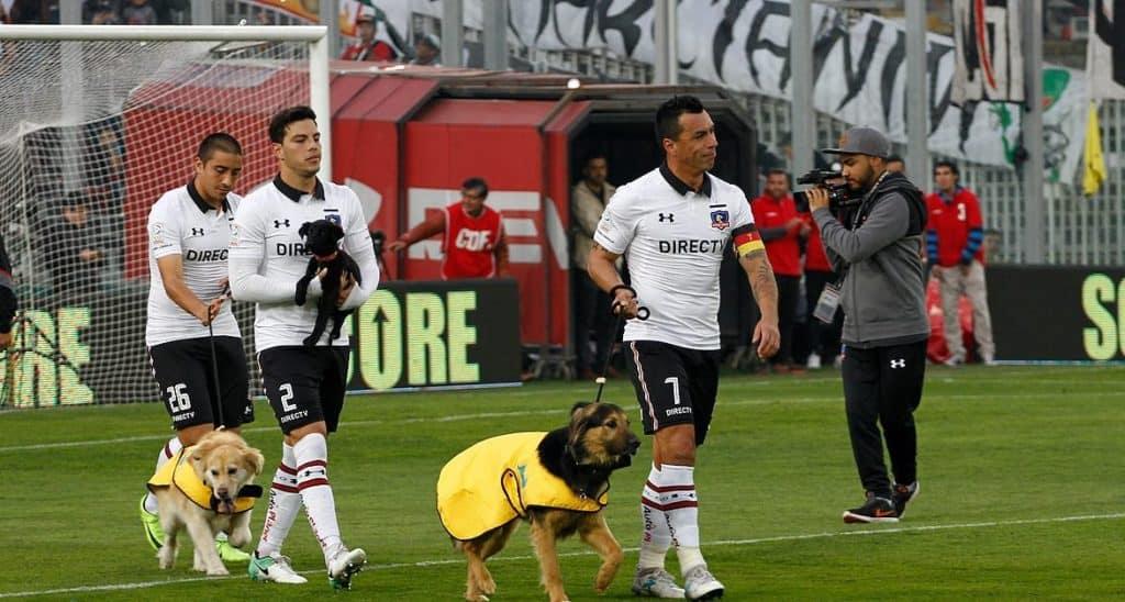 Chile: Un famoso club de fútbol salió a la cancha acompañado de perritos para concientizar sobre la adopción de mascotas