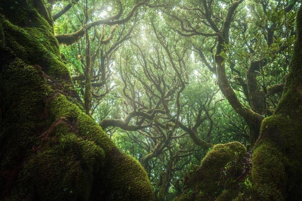 Conoce la fascinante instalación para recolectar agua de lluvia en un bosque italiano
