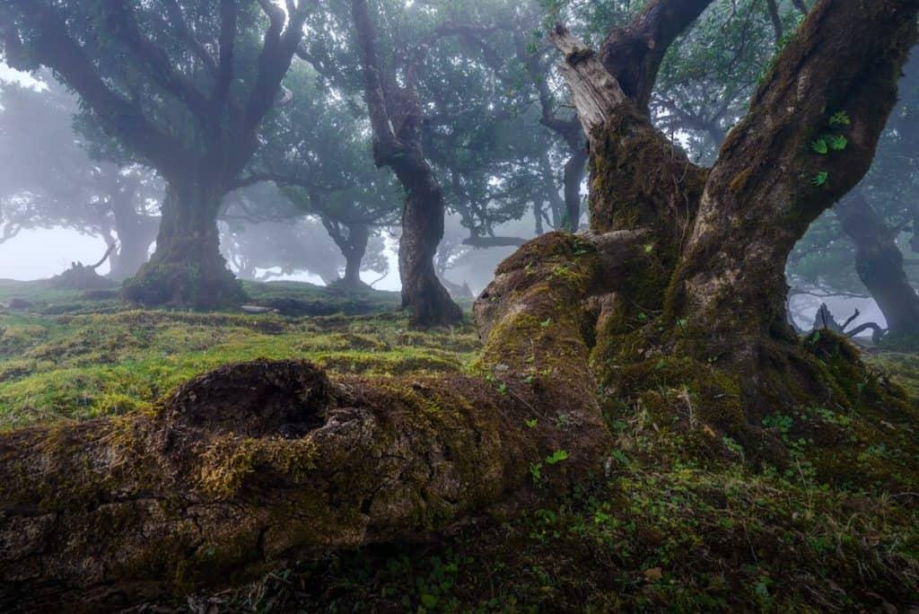 fanal forest albert dros 2 1
