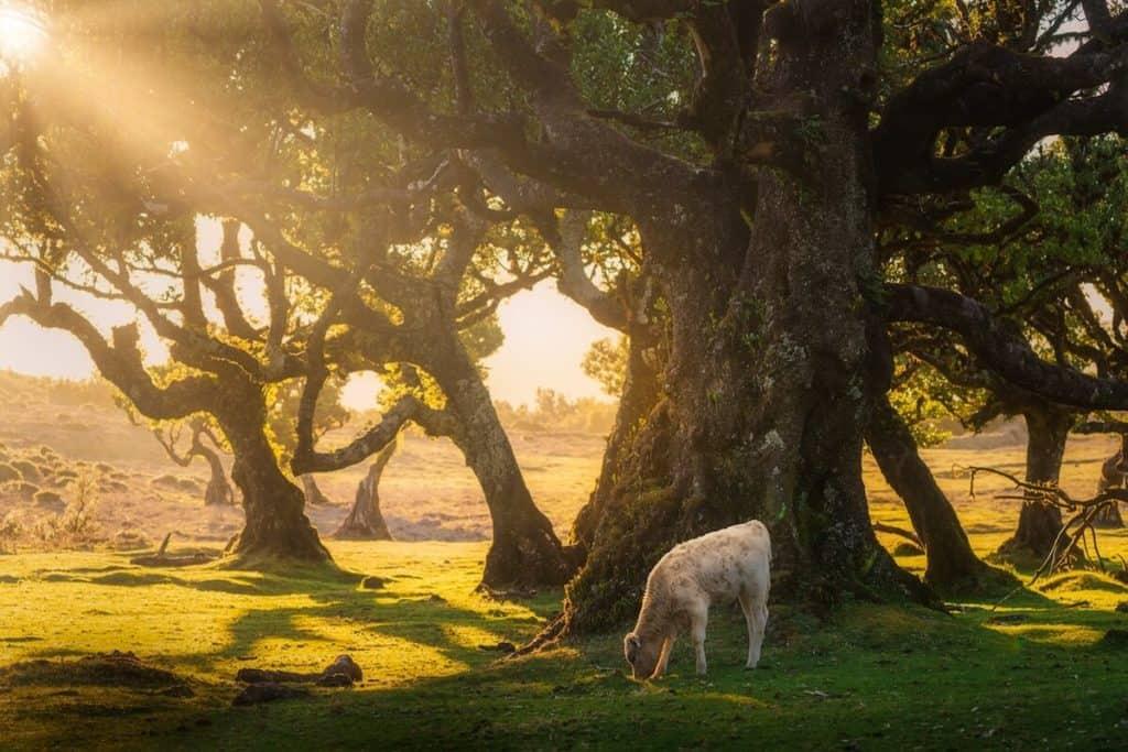 fanal forest albert dros 19 1