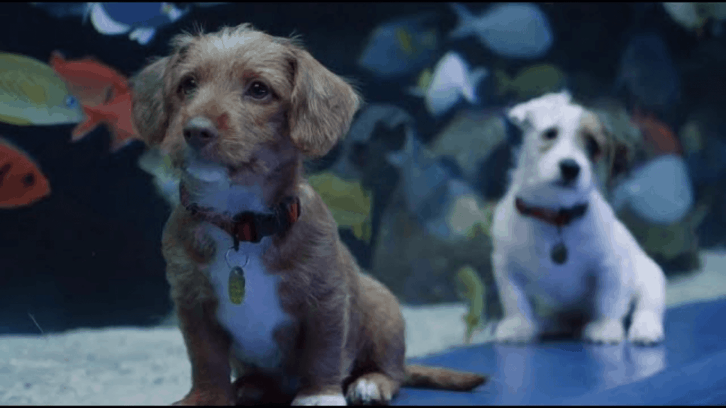 Cachorros visitan un acuario vac%C3%ADo en Atlanta y aprovechan a jugar 1