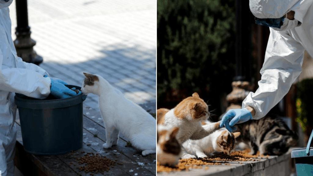 imagen Estambul Autoridades se encargan de alimentar a miles de gatos callejeros ante la ausencia de personas en las calles 43