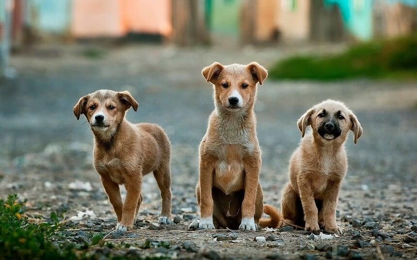 Zhuhai, la segunda ciudad china en prohibir el consumo de carne de perro y gato » Intriper.