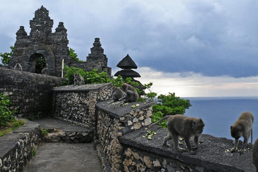 Imagen Disfrutar Bali Bosque De Monos
