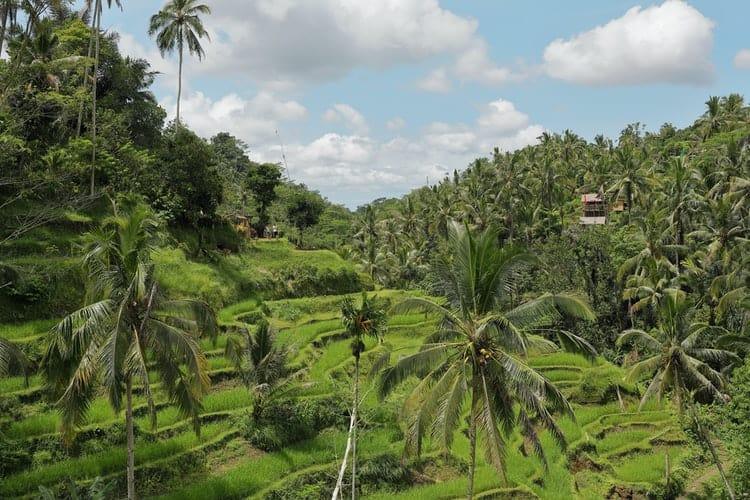 Imagen Imperdibles De Bali Estos Son Los Lugares Que Debes Visitar En Tu Primer Viaje A La Isla De Los Dioses 8