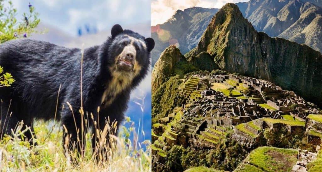 imagen oso de anteojos portada 00000 1200x642 1